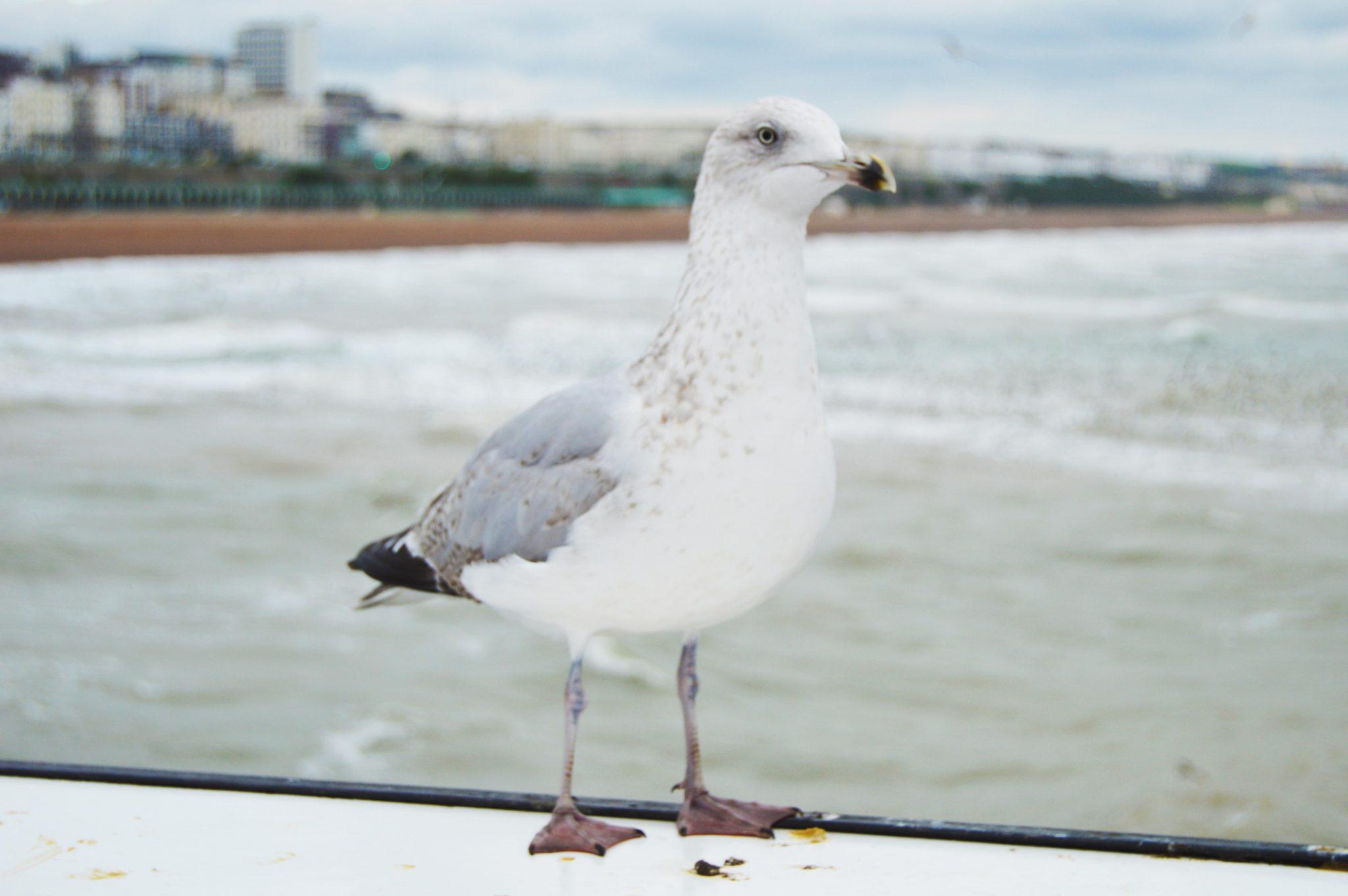 A Vegan in Brighton: VBites